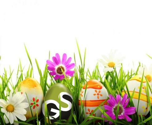 SG_Egg cropped